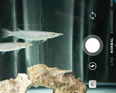 5 Kebiasaan Unik Hobiis Ikan Jaman Now
