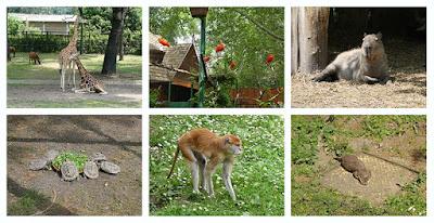 Un fin de semana en Győr: croquis de animales del zoo