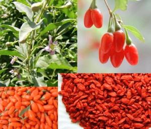 Cooking with love ! : Dulceata de fructe Goji ( Goji berry..
