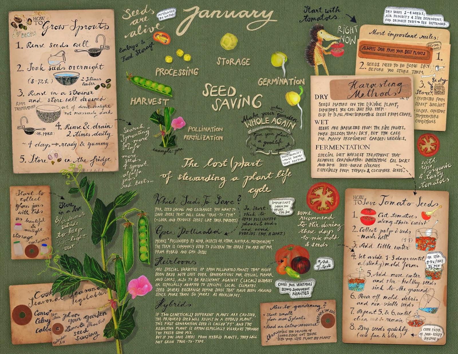 Seeds 4 All: wall calendar