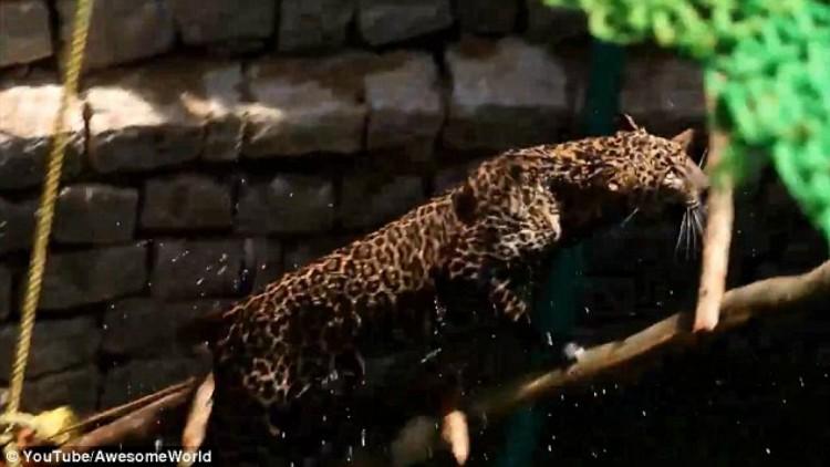 Ινδία:Χωρικοί έσωσαν λεοπάρδαλη που είχε πέσει σε πηγάδι (βίντεο)