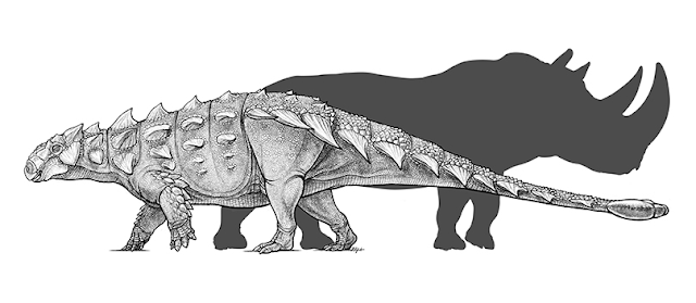 New species of armoured dinosaur identified