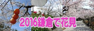 2016鎌倉で花見