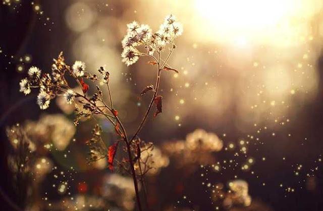 Mùa thu dại khờ - Góc thơ