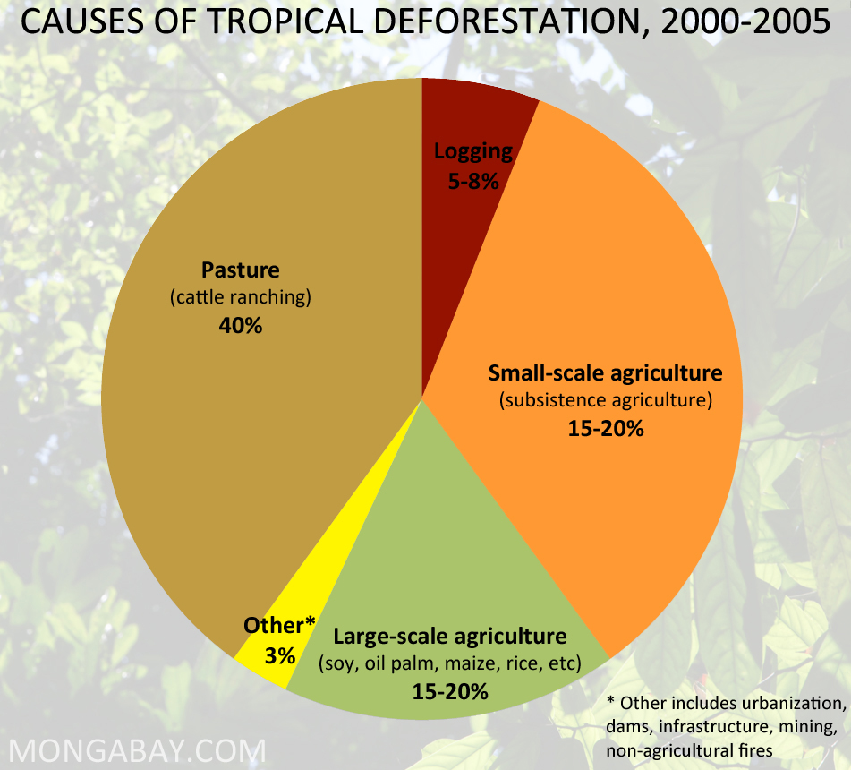 The causes of the deforestation of earth