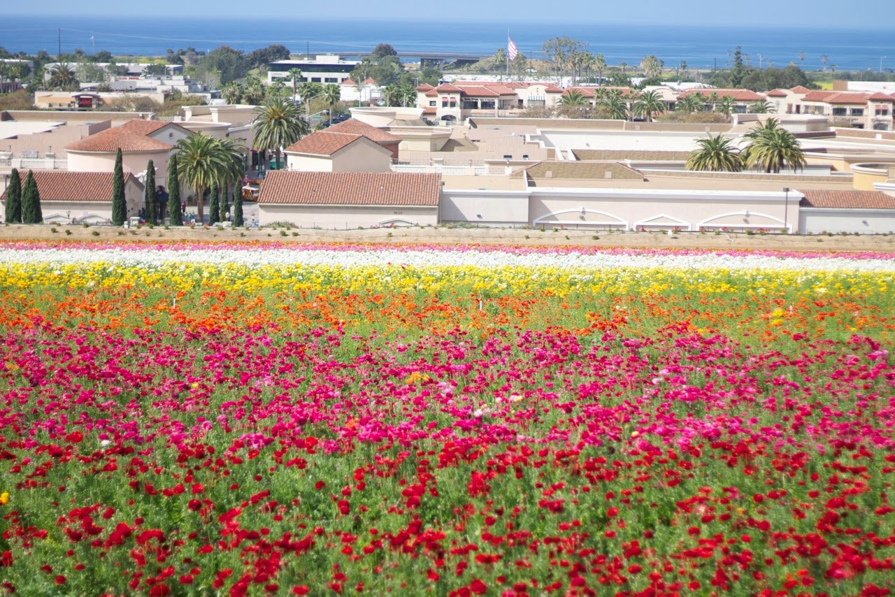 Carlsbad Flower Fields and Carlsbad Premium Outlets, Carlsbad Ocean, Carlsbad Premium Outlets, Kate Spade Outlet in California, So Cal Activities