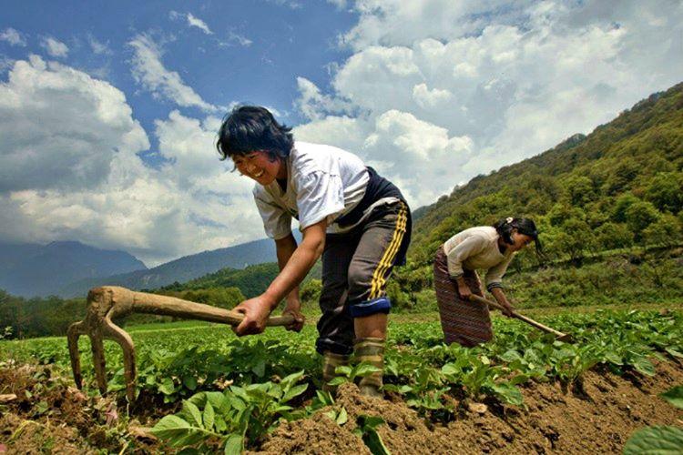 Yetiştirilen ürünlerin organik olmaları zorunludur, standartlara uyulmaması yasal olarak suçtur.