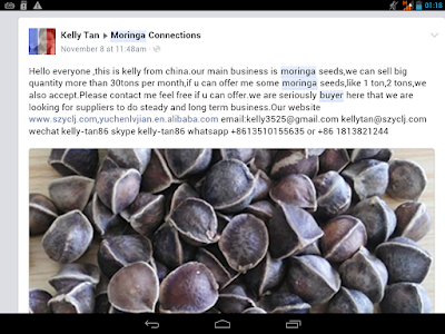 Moringa seeds buyers