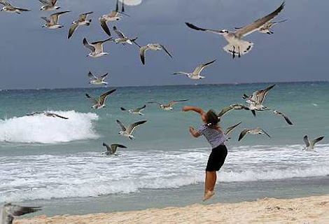 A child plays with seagulls
