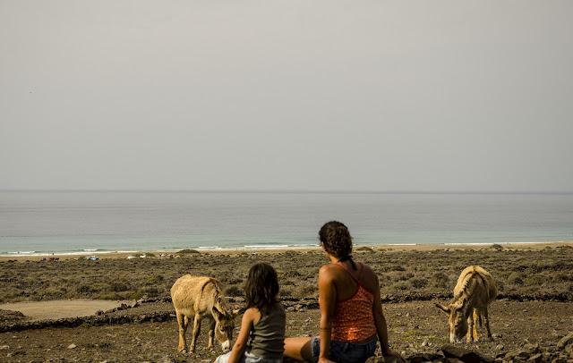 Vida salvaje de Cofete. Burros majoreros acompañan el camino desde la playa de Cofete al pueblo.