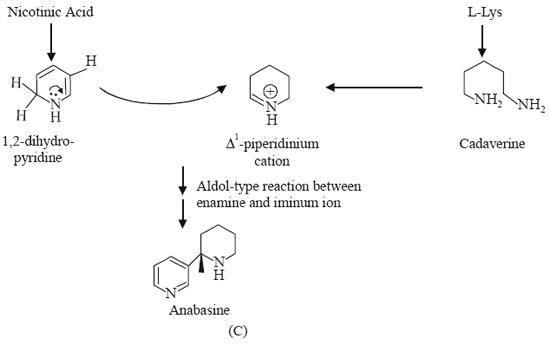Biosynthesis of Nicotine, Anabasine and Niacin