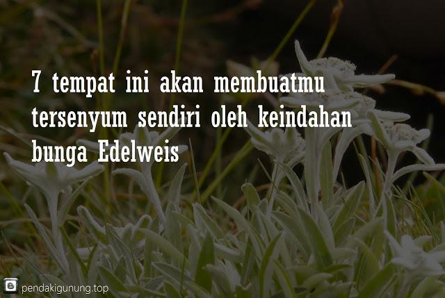 tempat terindah di indonesia untuk menyaksikan keindahan gunung edelweis