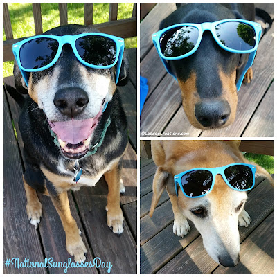 The Future's So Bright, the Lapdogs Gotta Wear their #Chewy shades! #NationalSunglassesDay #RescueDogs #AdoptDontShop ©LapdogCreations