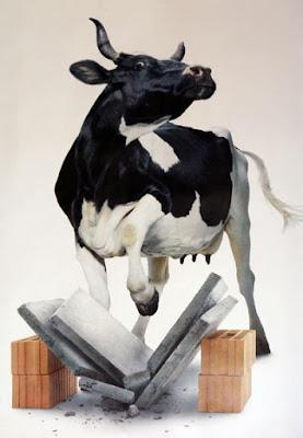 powerful cow
