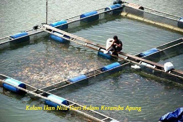 Gambar Contoh Kolam Ikan Nila Dari Kolam Keramba Apung Lengkap Dengan Kelebihan Dan Kekuranganya