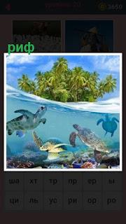 под водой плавают рыбы а на берегу риф с растительностью