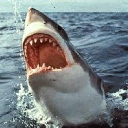 Le requin en plastique de Spielberg pour Les Dents de la mer (1975)