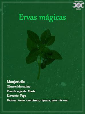 Ervas mágicas - Wicca, magia, bruxaria, paganismo - Manjericão