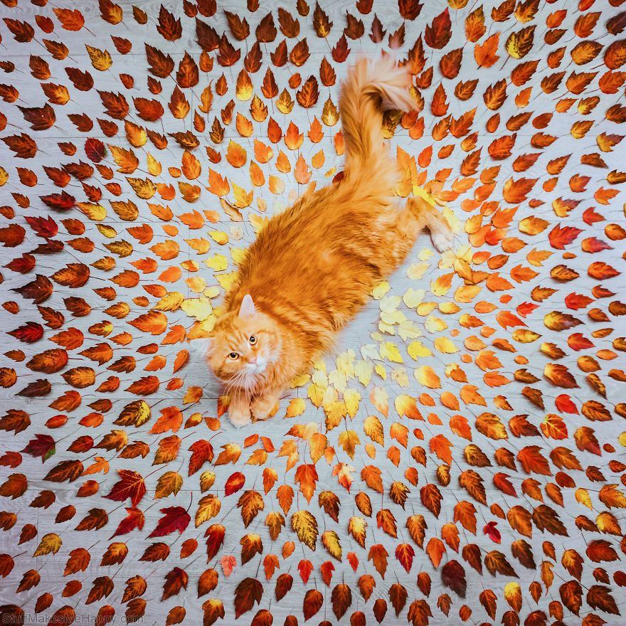 Autumn Photography by Photographer Kristina Makeeva
