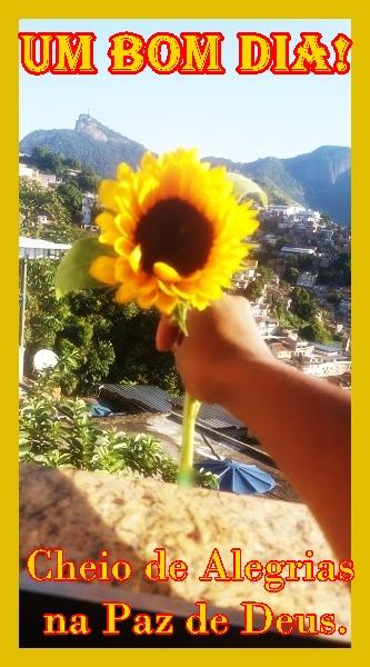 Flor de Gira-sol - https://www.facebook.com/faunaefloraaqui/