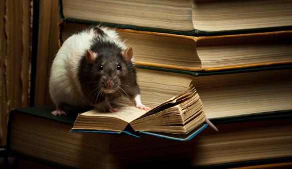 najlepsze książki dla dorosłych