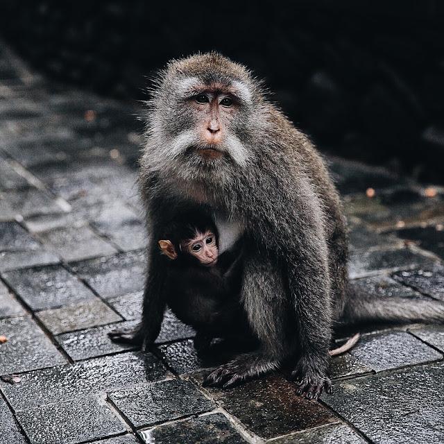 ubud tempio delle scimmie le 10 cose piu belle da visitare a bali
