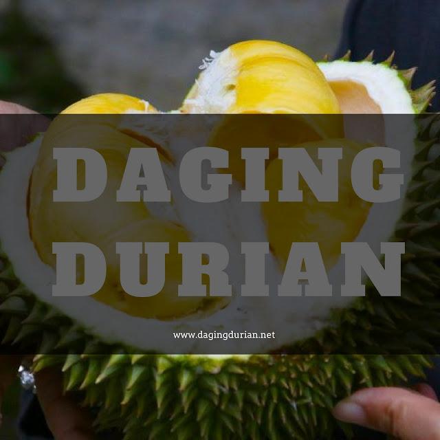 pabrik-daging-durian-medan-legit-di-morowali