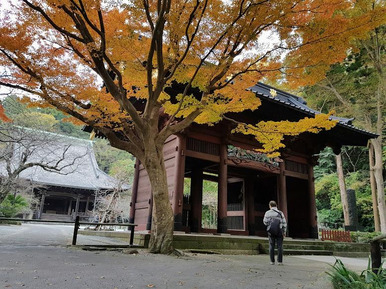 寺內的秋色