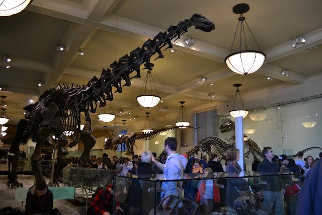 Динозавр. Американський музей природознавства, Нью-Йорк(American Museum of Natural History, NYC)