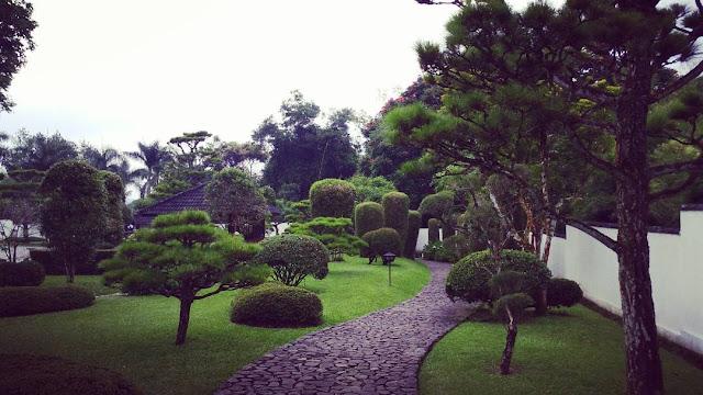 foto pepohonan hijau di taman bunga nusantara