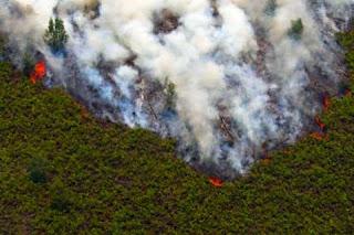 Mengelola Sumber Daya Hutan dengan Prinsip Ekoefisiensi