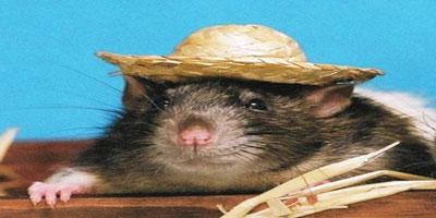 الفأر الخشبي في الابراج الصينية