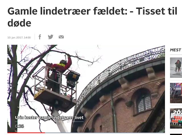 http://nyheder.tv2.dk/lokalt/2017-01-10-gamle-lindetraeer-faeldet-tisset-til-doede