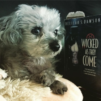 Murchie lies on his sheep-shaped pillow with his paws crossed daintily in front of him. Behind him, propped upright, is a paperback copy of Wicked As They Come. Its cover is very dark, with the gleam of a white man's bare chest beside the title in white.