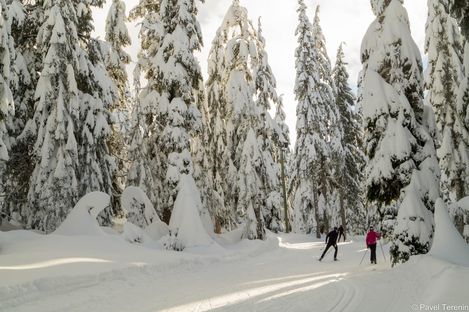 одинокие лыжники, а так же организованные группы