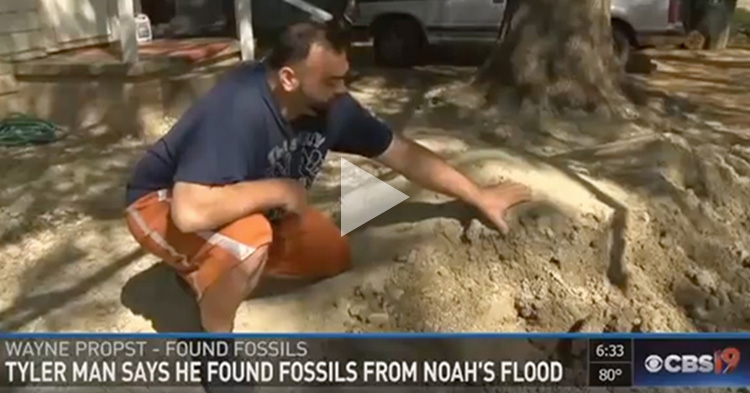 A Man claims that he discovered fossils from Noah's flood from his aunt's front yard