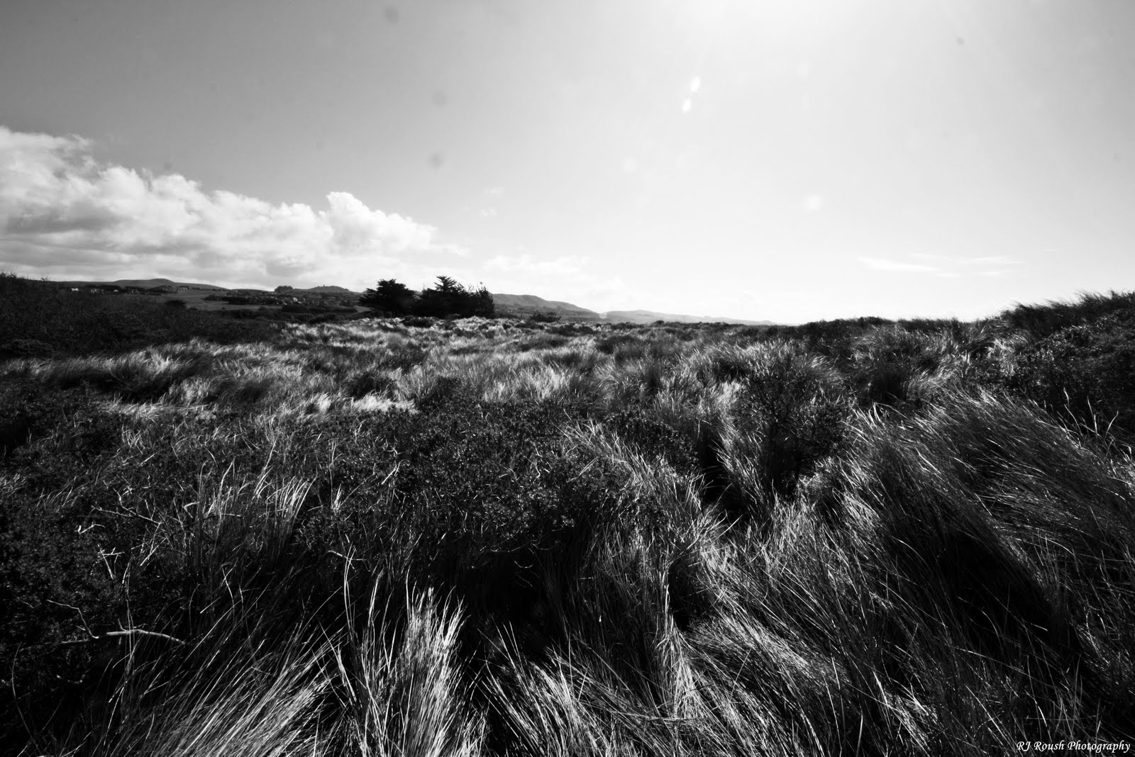 Mediocre Surreality Mendocino Landscapes