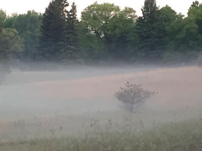mist at dawn