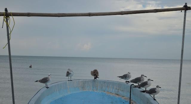 Aves posadas en una barca en la isla de Holbox