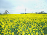 http://pridenstyle.blogspot.co.uk/2014/04/rapeseed-farm.html