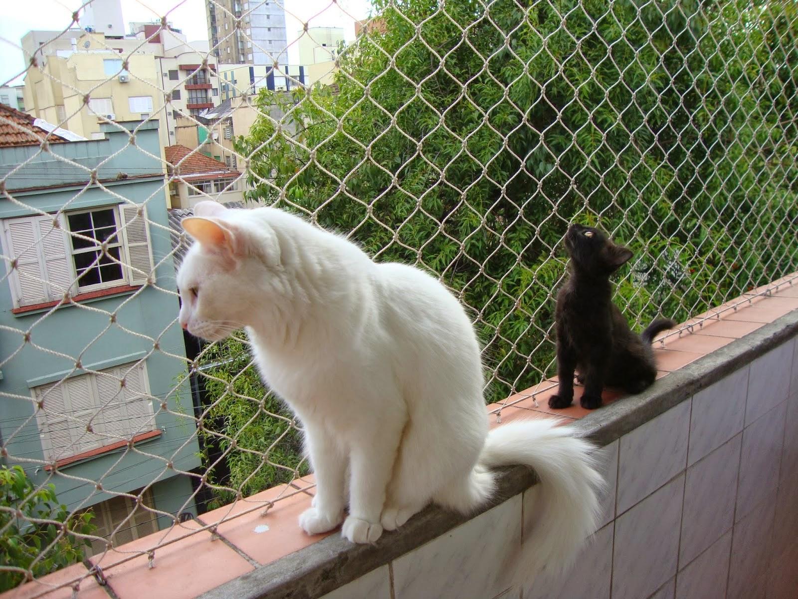 the animal foundation las vegas