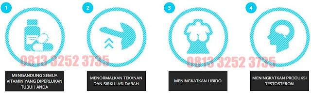 Toko Obat Hammer Of Thor Surabaya 081332523735