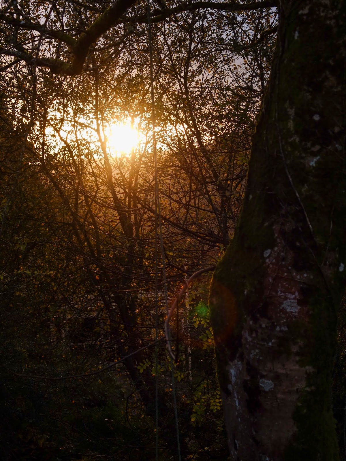 Sun shining behind bare tree branches.
