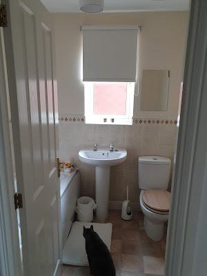 bathroom, blind, make-my-blinds, home, cat