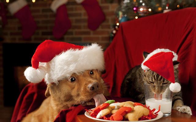 Hond en kat met kerstmuts