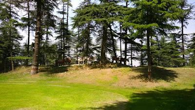 shimla-forest