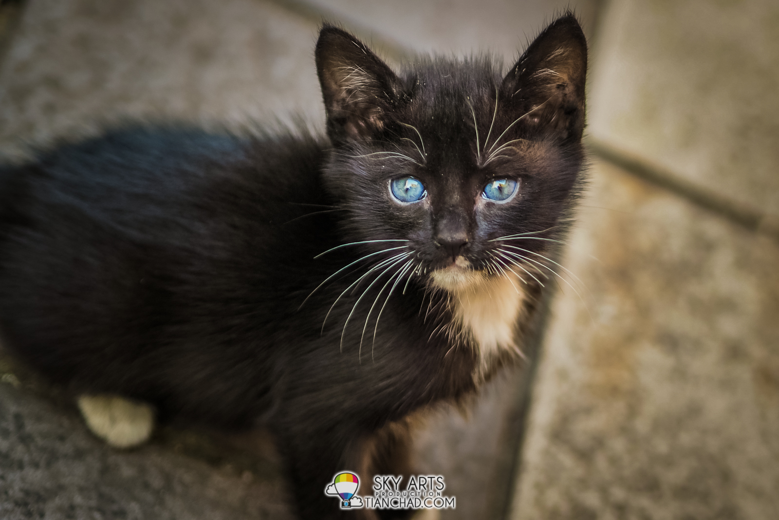 The Cat with Black Fur & Blue Eyes