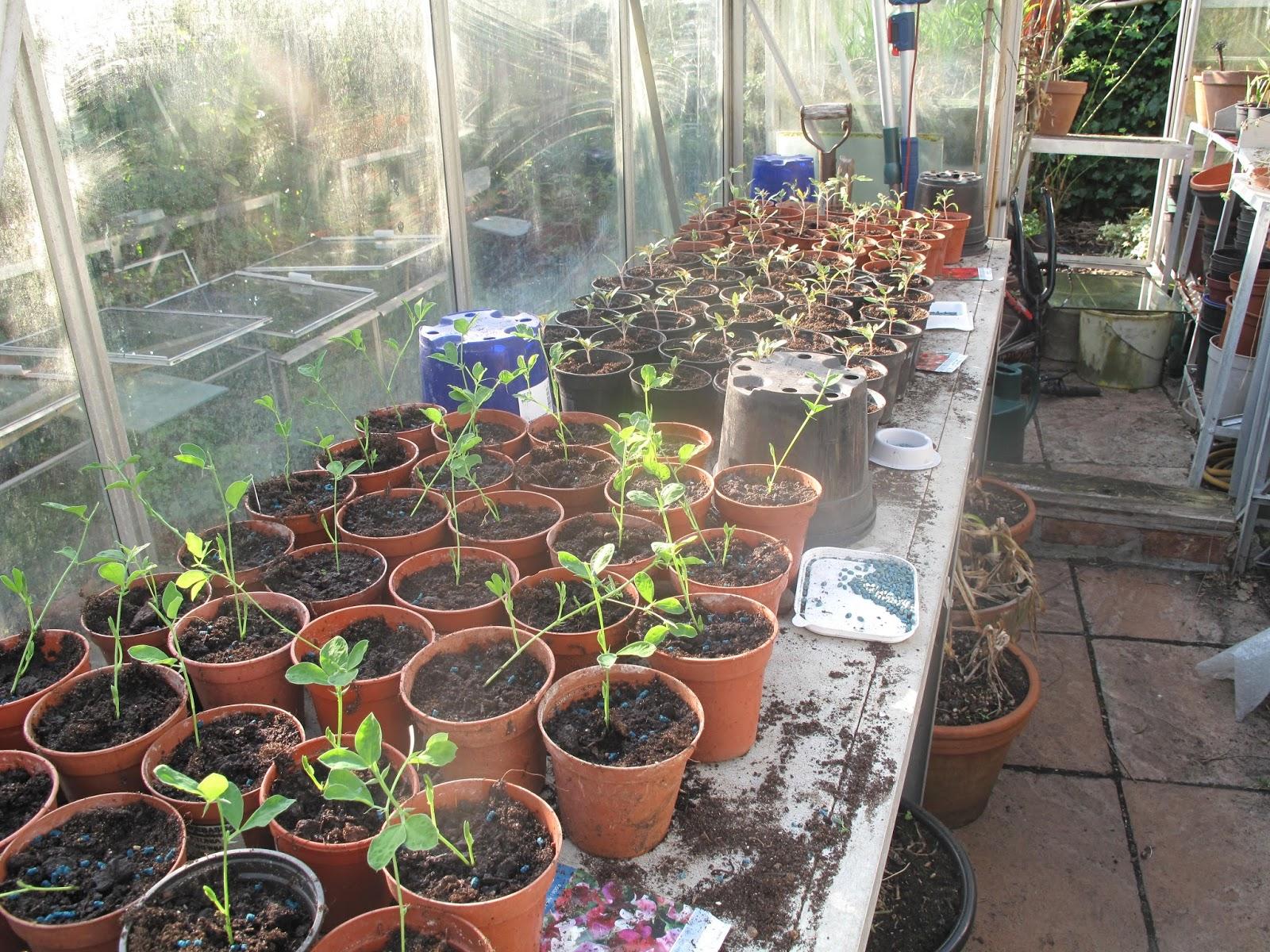 designs design garden gardening greenhouse