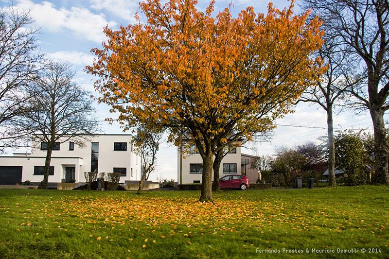 árvore co folhas amarelas