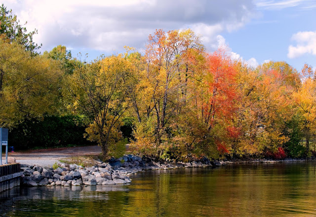 Lovely fall foliage against a rocky shoreline, with a road peeking out from behind.